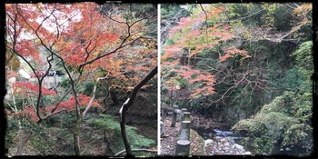 箕面の滝2.jpg